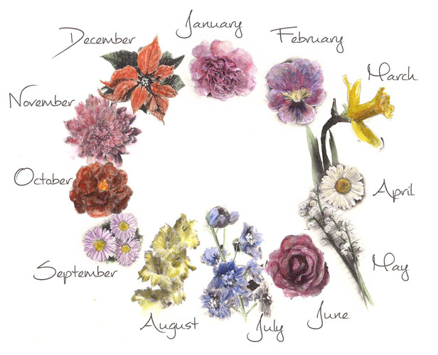 All Birth Month Flowers - Pamela Jane Ph