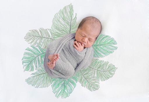 TEST baby tropical leaves.jpg