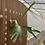 Thumbnail: P.Diversifolium spore②