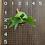 Thumbnail: P.Hillii cv.Pumilum Sporelings