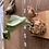 Thumbnail: P.Elephontotis×P.Alcicorne Madagascar ①