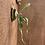 Thumbnail: P.Riverflow spore