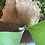Thumbnail: P.Doragon sporeling