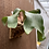 Thumbnail: P.Elephontotis×P.Alcicorne Madagascar ④