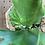 Thumbnail: P.Coronarium 'Thailand dwarf'②