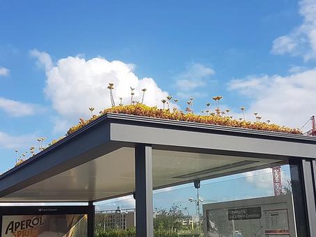 Stovky zastávek přeměnili na království pro včely. Nizozemci se pracovitým živočichům zavděčí.