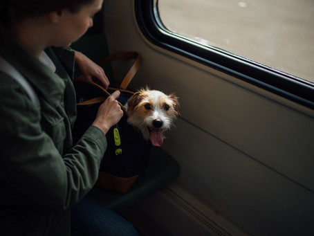 How Traveling has Changed for Emotional Support Animals