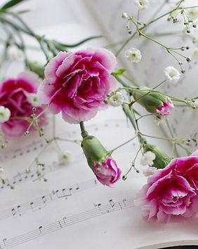 Pink-carnations-Gypsophila-paniculata-sh