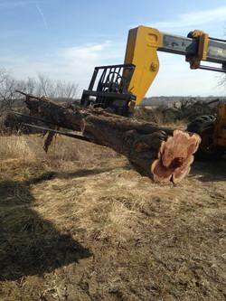 Harvesting Wood to Repurpose