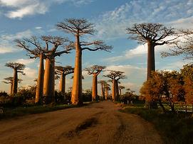 baobab-madagascar-africa.jpg
