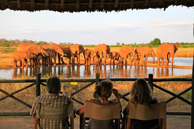 Voi-Lodge-Elefanti-Kenya.jpg
