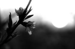 Flower-B&W-with-sun-light-Deni-Gostl-Photography-DGArt-Creations