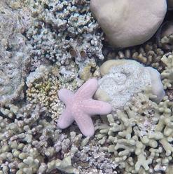 Piccola stella marina