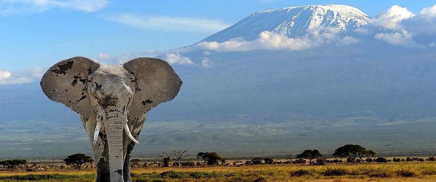 elephant_kilimanjaro_amboseli_kenya.jpg