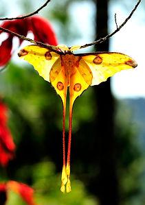 farfalla-ranomafana-parco-nazionale-mada