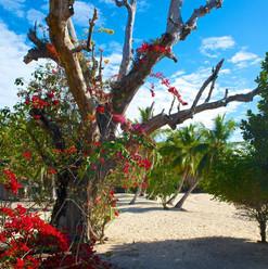 spiaggia-fiori-rossi-isola-di-sakatia-co