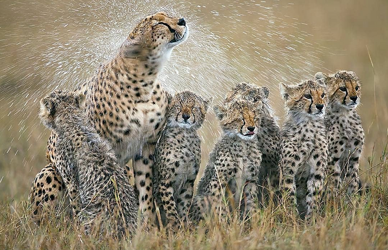 Leopard Family TANZANIA.png