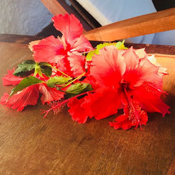 fiori-rossi-corail-noir-hotel-ambaro-nos