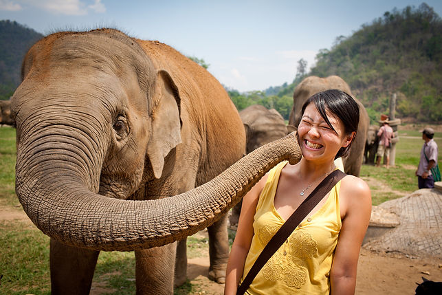 Elefante Bacio ad una turista - Kenya.jp