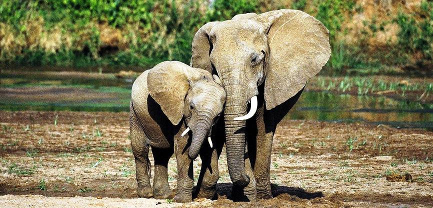 Elefanti coccole tra madre e piccolino -