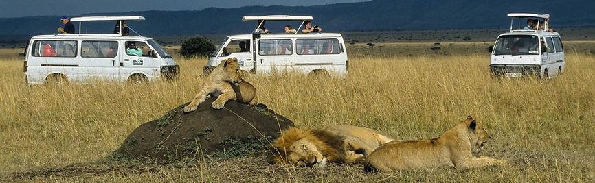 Leoni relax - Kenya Safari.jpg