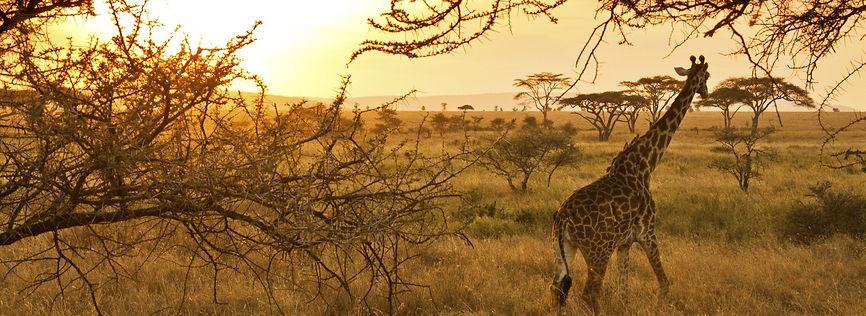 Safari, Parco Nazionale di Serengeti.jpg
