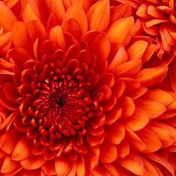 l-heure-bleue-madagascar-fiore-arancione