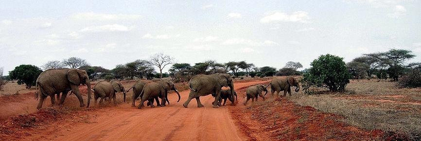 Kenya-Safari-Parco-Nazionale-Tsavo-Elefa