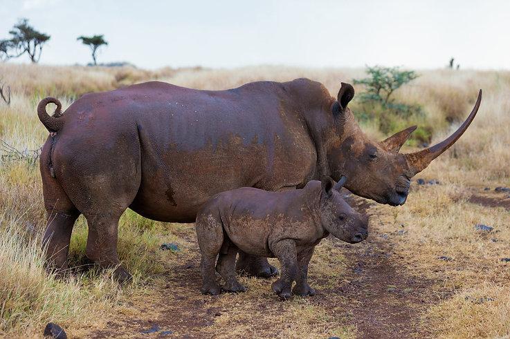 RHINOS with Baby - Kenya.jpg