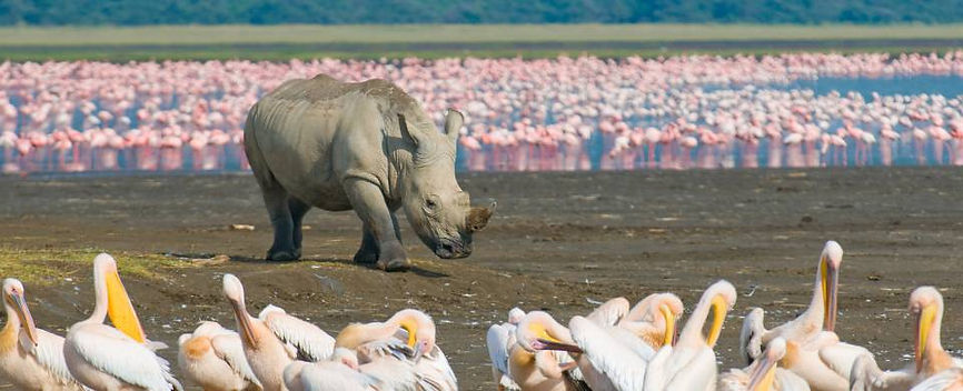 Lake-Nakuru-Rhino - Kenya.jpg