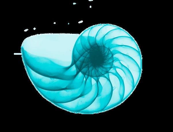 x-ray-nautilus-shell-by-edward-charles-l