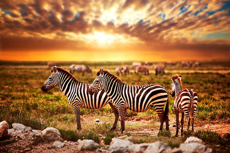 Zebre-Tsavo-Est-Kenya-Tramonto.jpg