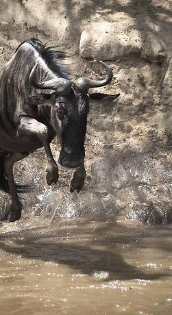 GNU Dive - kenya.jpg