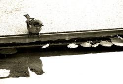 Little-Bird-reflection-Prag-Czech-Republic-Deni-Gostl-Photography-DGArt-Creations