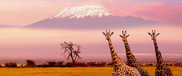 Tramonto-Kilimanjaro-Giraffe - Kenya.jpg