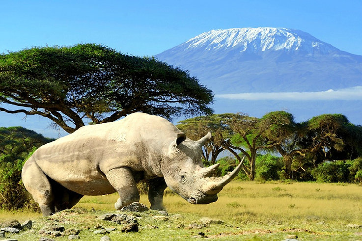 Amboseli Kilimanjaro Rinoceronte - Kenya