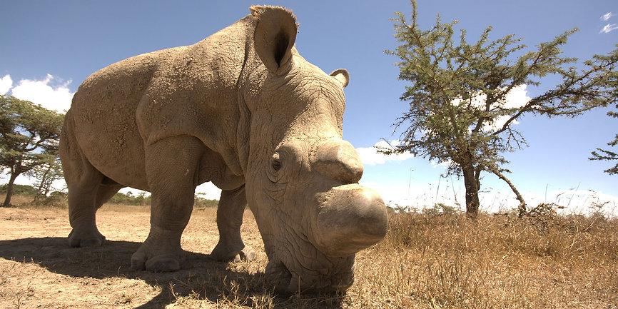 Rinoceronte-Kenya.jpg