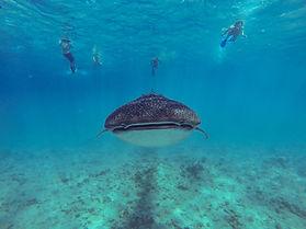 Balena 2.jpg