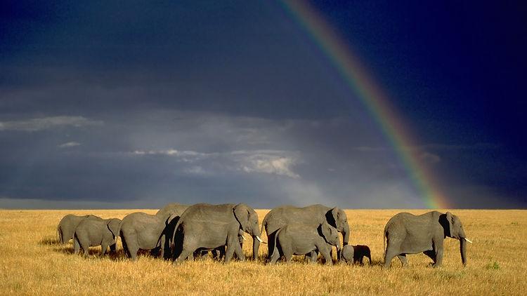 Elefanti con ARCObaleno.jpg