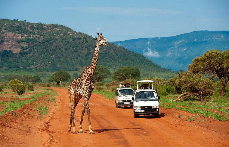 Tsavo_East_National_Park_Giraffe - Kenya