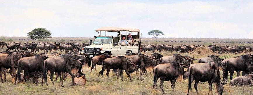 Jeep circondata da Gnu - Serengeti Natio