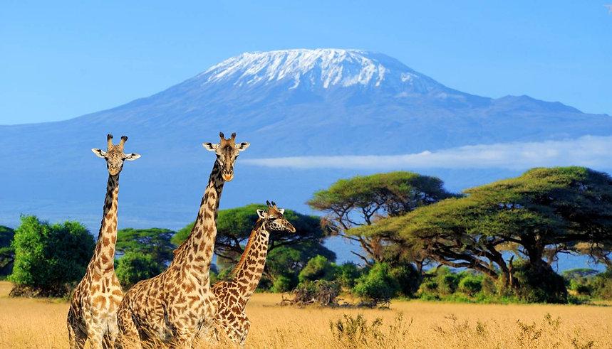 Giraffe Amboseli NAtional PArk - Kenya.j