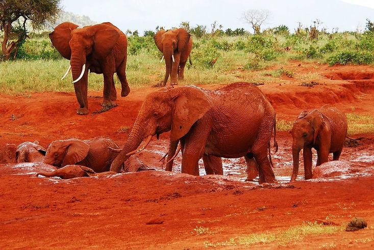 Tsavo Est Elefanti Rossi - Kenya.jpg