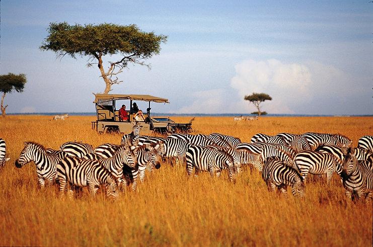 Discover-Wildlife-Safari-Tanzania-Tour.j