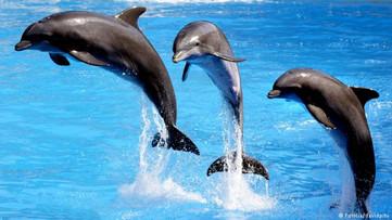 Spettacolo dei Delfini