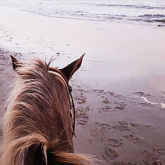 horseriding-cilento-coast-natinal-park-c