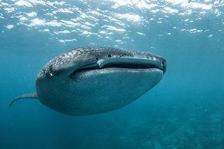 Balena 3.jpg