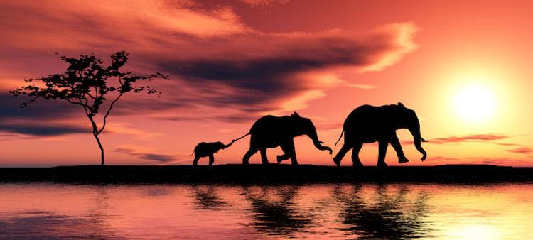 Tramonto con silhouettes di Elefanti - K
