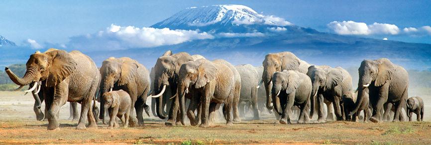 Elefanti e Kilimanjaro, Amboseli - Kenya