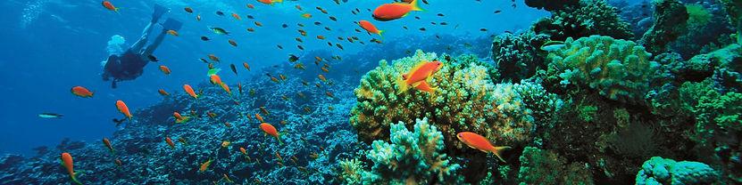 Diving Maratea.jpg